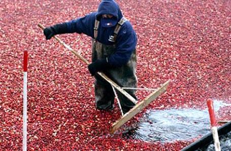 Cranberry extract-03